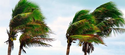 Tenerife y La Palma estarán este martes en situación de alerta por vientos de hasta 120 km/h