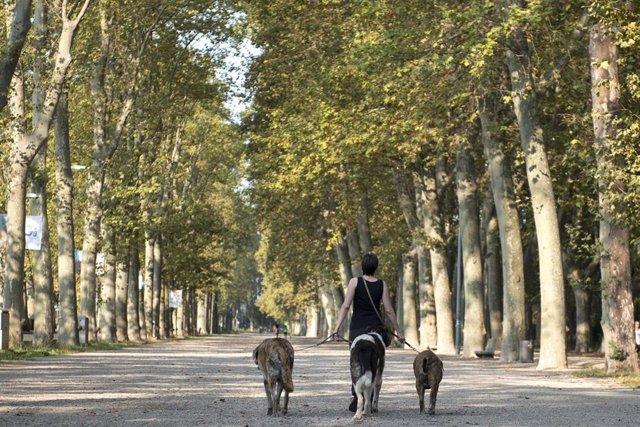 Una mujer pasea por un parque ubicado en Girona, Catalunya, (España), a 16 de septiembre de 2020.