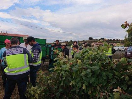 Se intensifican los controles para luchar contra la explotación laboral durante la vendimia en Euskadi