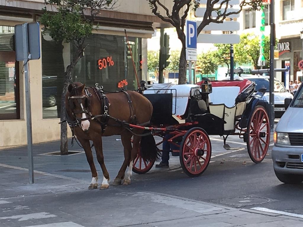 El Ayuntamiento de Marbella diseña un plan para revocar las licencias de coches de caballos en tres años 3
