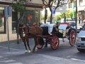El Ayuntamiento de Marbella diseña un plan para revocar las licencias de coches de caballos en tres años 2