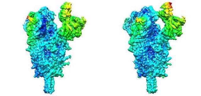 Distintas conformaciones que adopta la espícula del SARS-CoV-2.