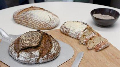 Una biotecnológica valenciana crea una masa madre activa y en polvo para uso doméstico que permite tener pan en horas