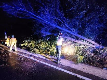 Los Bomberos de Jaén realizan diversas intervenciones por avisos relacionados con el fuerte viento