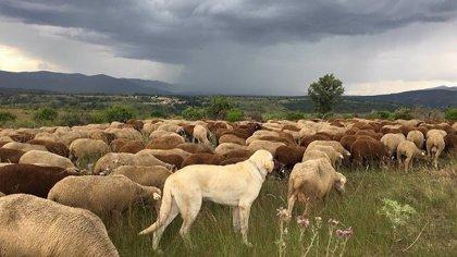 """UPA-UCE Extremadura confía en el que acuerdo de la UE sobre la PAC """"beneficie a la agricultura y ganadería familiar"""""""