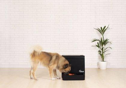 Kibus Petcare cierra ronda de financiación de 350.000€ para lanzar un aparato que cocina alimento saludable para perros