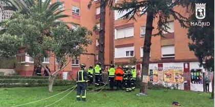 Bomberos retiran un enorme árbol que por efecto del viento cayó sobre un edificio del barrio de Canillas