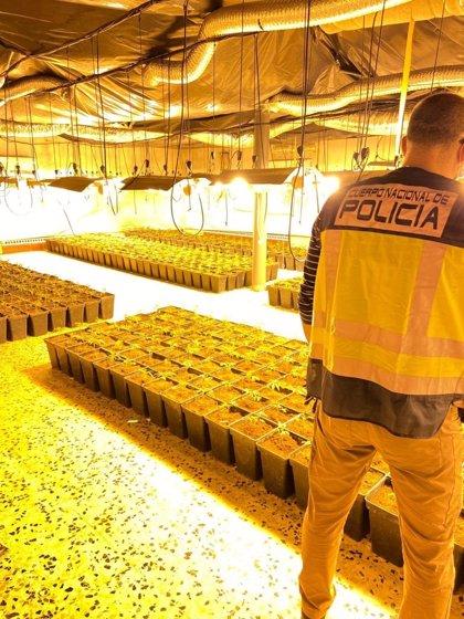 La Policía desmantela cuatro plantaciones de marihuana 'indoor' y detiene a siete personas en Mérida