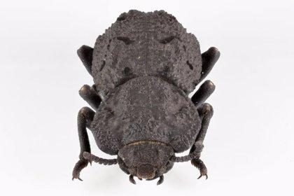 Descifrado el secreto del insecto indestructible
