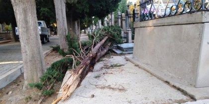 Los fuertes vientos de anoche provocan importantes daños en árboles de Logroño