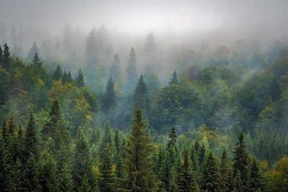 """Luena afirma que la UE """"debe ponerse a la vanguardia y legislar contra la deforestación mundial"""""""