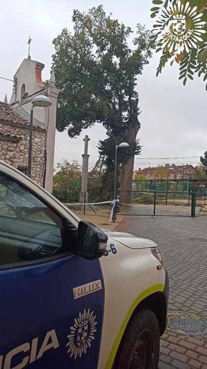 El viento rompe un olmo centenario en Pinto, que será clonado por el Imidra