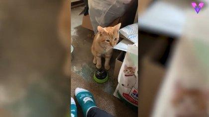 DESCONECTA.-Este gato está aprendiendo a usar botones de voz para comunicar lo que quiere a su dueña