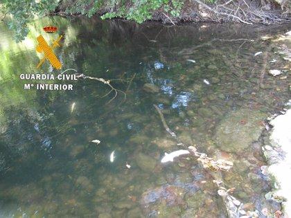 Localizados 30 ejemplares de truchas muertas por un vertido en el río Ultzama a su paso por Latasa