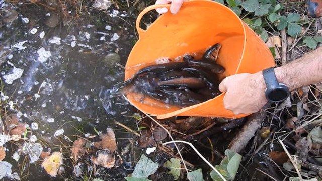 Pla tancat de l'alliberament de peixos autòctons a la Noguera Ribagorçana. Imatge del 23 d'octubre de 2020. (Horitzontal)