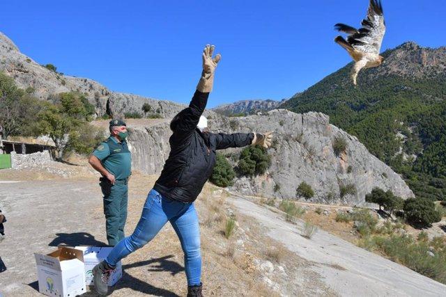 Suelta de águila calzada en el Parque Natural Sierra de Castril