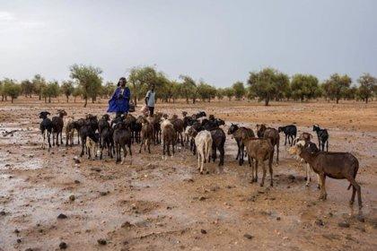 Imágenes satelitales e inteligencia artificial para luchar contra el cambio climático en el Sahel