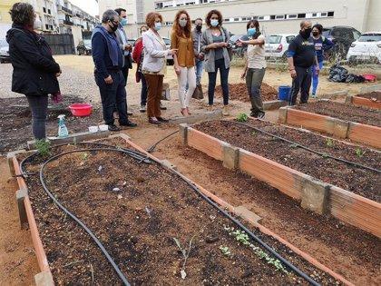 El Ayuntamiento de Sevilla impulsa la quinta edición del Programa de Dinamización de Huertos Urbanos