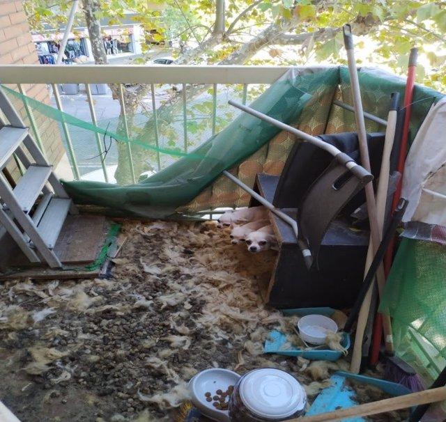 Rescaten vuit animals que vivien en males condicions de salubritat al barri de l'Eixample, Barcelona.