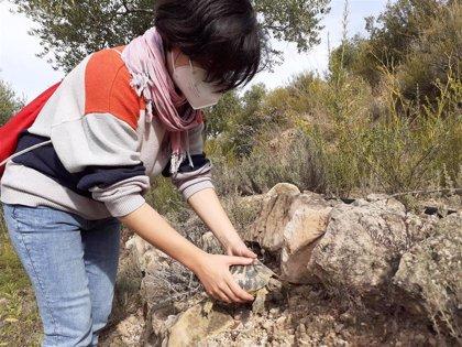 Endesa y Trenca liberan 30 tortugas mediterráneas en la reserva de Bovera (Lleida)