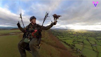 Este hombre se da un paseo en parapente con su mascota: un halcón
