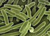 Foto: Probióticos: cómo fortalecer las defensas de forma natural