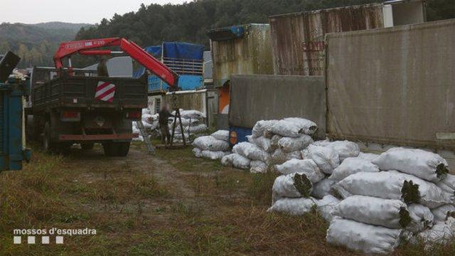 Pla general de 14 tones de pinyes comissades pels Mossos d'Esquadra en un magatzem de Sant Celoni. Imatge publicada el 27 d'octubre del 2020 (horitzontal)