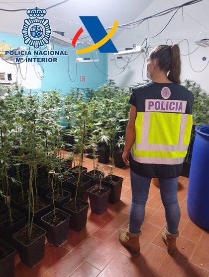 Ocho detenidos de un grupo dedicado al narcotráfico entre Andalucía y País Vasco