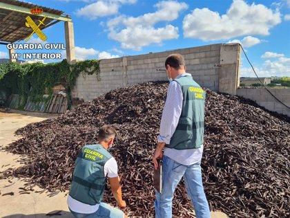 Investigadas 41 personas por su presunta implicación en la sustracción de 20 toneladas de algarroba en Valencia