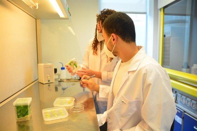 Investigadores en un laboratorio de la UPCT