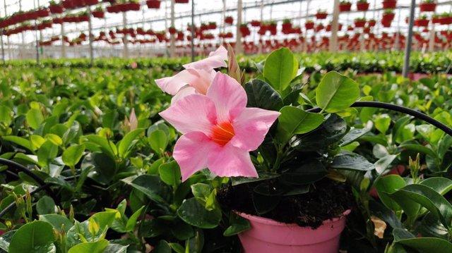 Invernadero de planta ornamental