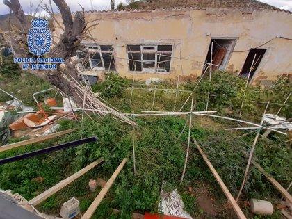 Desmantelan una plantación de 'marihuana' en el Barrio del Cortijo y detienen al dueño de 54 años