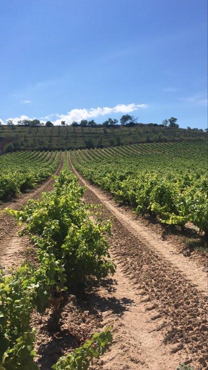 Desarrollo Rural destina 2 millones en ayudas excepcionales a agricultores y pymes afectados por la crisis del Covid-19