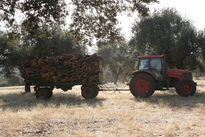 Más de 8.500 pequeños y jóvenes agricultores reciben 6,5 millones en concepto de anticipo de la PAC