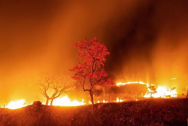Incendio en el Pantanal de Brasil.