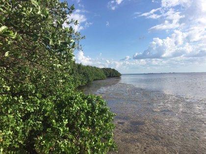 Brasil.- El Supremo de Brasil anula los planes de Bolsonaro para acabar con la protección de los manglares tropicales