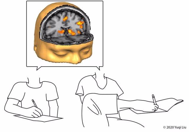 Las personas nacidas sin extremidades superiores que usan sus pies para alcanzar un objeto usan la misma área del cerebro que las personas que usan las manos.