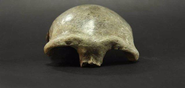 El casquete craneal encontrado en el valle de Salkhit en el este de Mongolia pertenecía a una mujer que vivió hace 34.000 años.