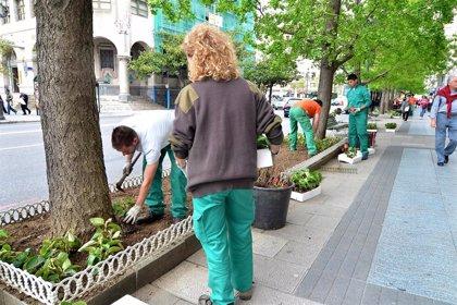 El Gobierno convoca las ayudas estatales Covid en el sector de la flor y planta ornamental