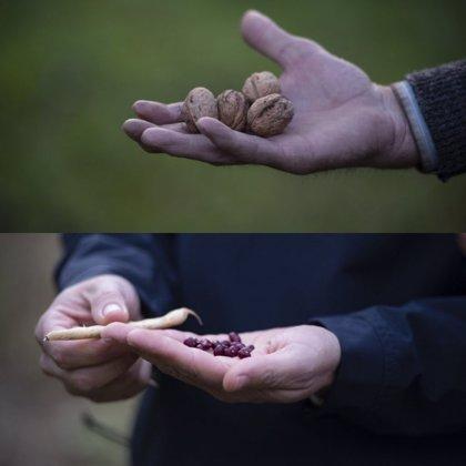 Alubia de Anguiano y Nuez de Pedroso ya pueden comercializarse en mercado nacional como Denominación de Origen Protegida
