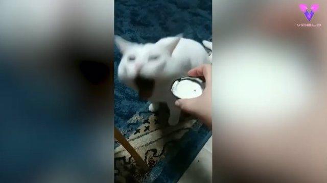 Las arcadas de este gato reaccionando a la comida que le ofrecen sus dueños se han hecho virales en Internet