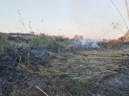 Un incendio quema 0,35 hectáreas de cañar cerca de Lloret de Vistalegre
