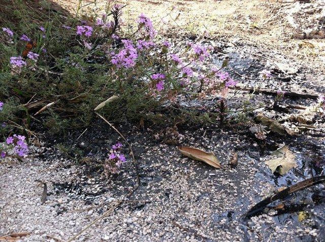Aspectro de los pozos de alquitrán de La Brea, en California