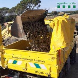 Pla mitjà del vehicle que han utilitzat els Agents Rurals per recollir les pinyes aquest dissabte 31 d'octubre de 2020. (Horitzontal)
