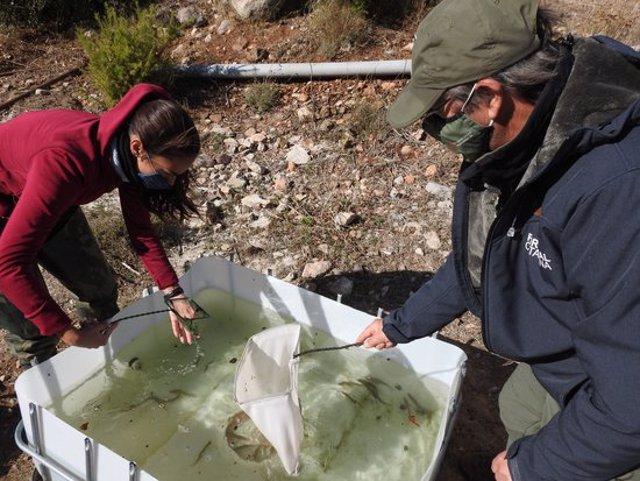 Pla mitjà de tècnics del Departament d'Agricultura durant l'alliberament de ciprínids a l'embassament de la Palma d'Ebre. (horitzontal)