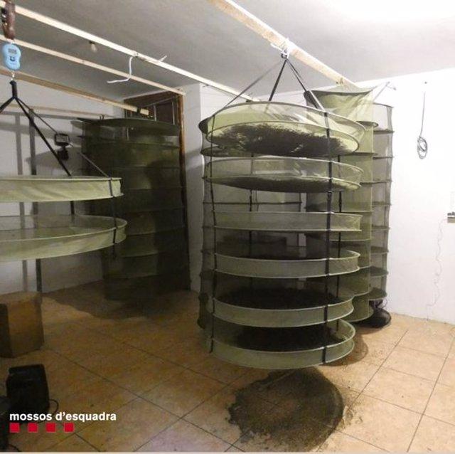 Pla de detall del punt on es va trobar la marihuana sostreta pels Mossos d'Esquadra d'una plantació situada dins un bosc de difícil accés de Bellpui, a les Valls d'Aguilar (Alt Urgell). Imatge del 2 de novembre de 2020 (Vertical).