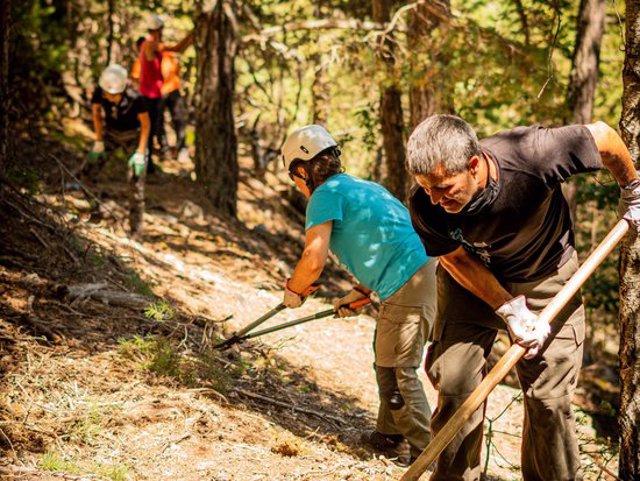 Pla general de voluntaris treballant al bosc l'estiu del 2020. (horitzontal)
