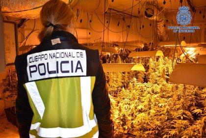 Cinco detenidos en Torrejón del Rey por cultivar y distribuir marihuana, tres de ellos reincidentes