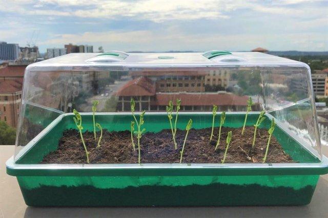 Experimento del nuevo suelo sintético