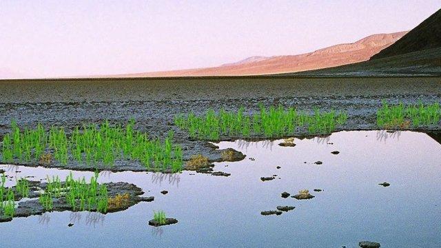 Rcereación artística de las primeras plantas terrestres